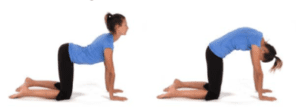 Cat and Dog Stretch Exercise